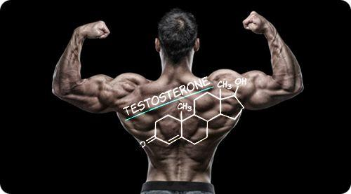 exercises that increase testosterone levels and growth hormone