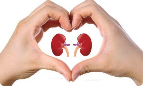 kidney repair supplement